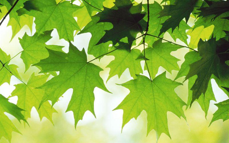 Summer-Leaves