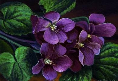 Purple_violets