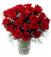 24stem_rose_webfd009